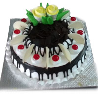 Premium black forest  (MIDNIGHT)