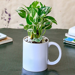 Money plant mug