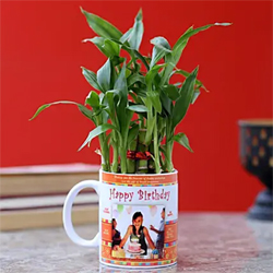 Personalised Bamboo Plant