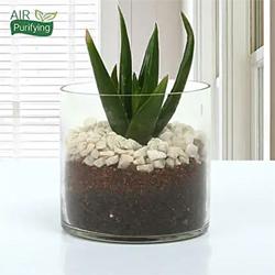 Aloe Vera Glory vase