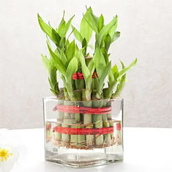 2 Layer Bamboo vase