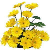 YELLOW GERBERAS BASKET