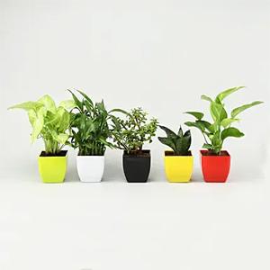 House Plant Set of 5