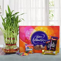 Yummy Chocolates N Bamboo Plant